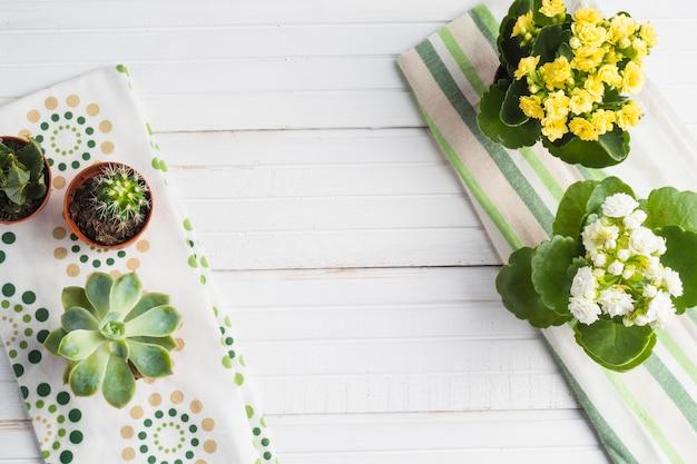 Cactus e vaso de plantas suculentas na mesa branca