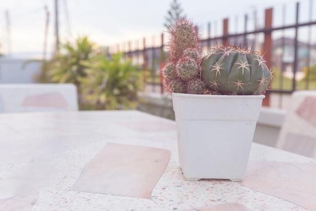 Cactus em pote na mesa de mármore. cor pastel ou estilo vintage. fundo do espaço de cópia