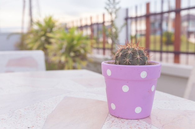 Cactus em pote na mesa de mármore. cor pastel ou estilo vintage.