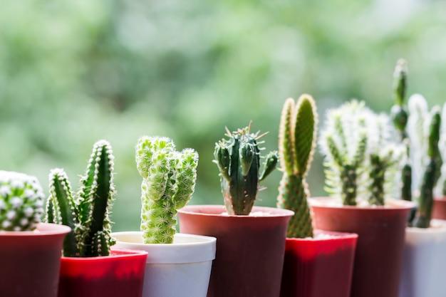 Cactus em pote na varanda com espaço de cópia