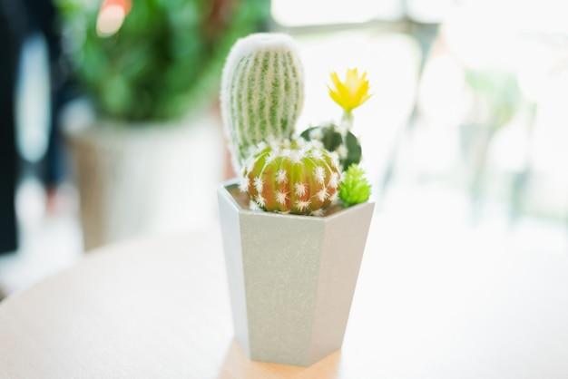 Cactus em um copo de plástico branco