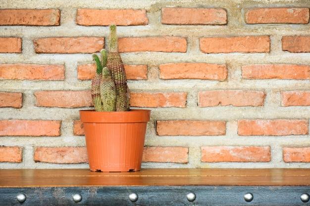 Cactus em uma panela na mesa de madeira