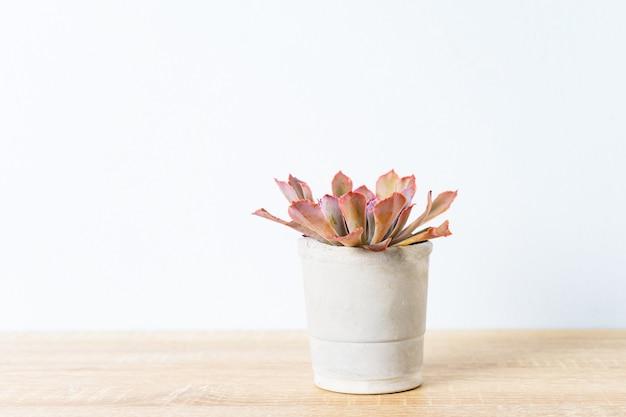 Cactus na decoração de vaso na mesa de madeira
