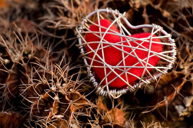 Cactus na varanda