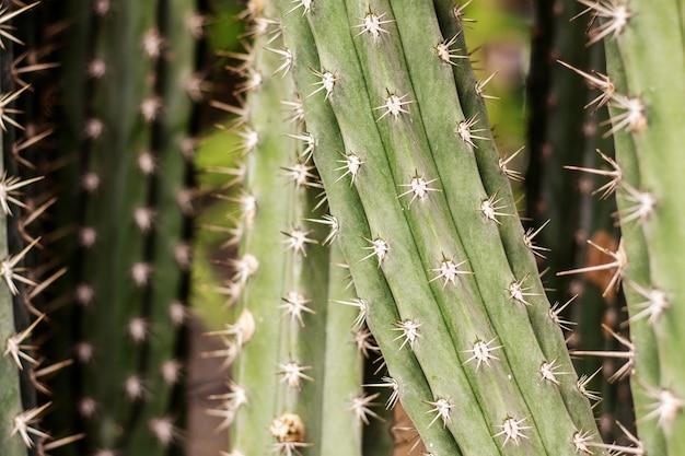 Cactus no verão com textura.