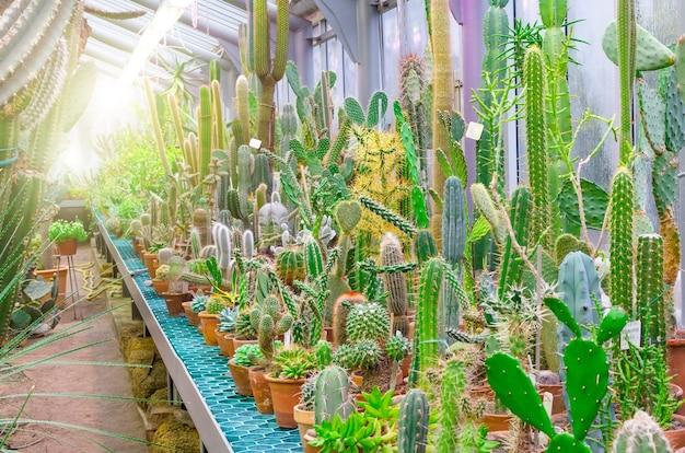 Cactus nos desertos tropicais da américa do norte.