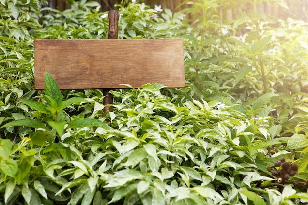 Cadastre-se com o ambiente de vegetação em dia ensolarado com espaço de cópia de texto