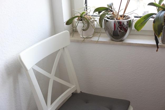Cadeira em uma sala ao lado de plantas