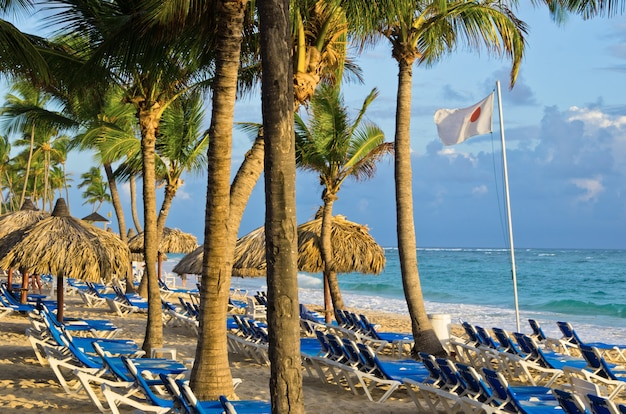 Cadeiras de praia sob uma palmeira