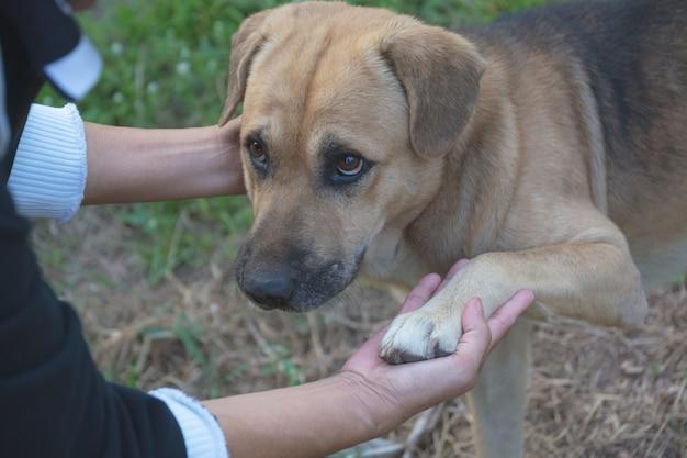 Cães agitando a mão com humanos, amizade entre humanos e cães.