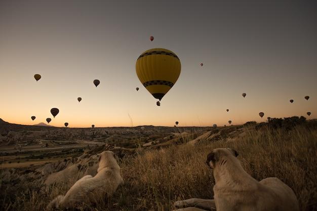 Cães apreciando a bela vista de balões quentes no céu durante o pôr do sol na capadócia, na turquia