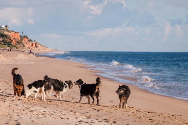 Cães brincalhões na praia