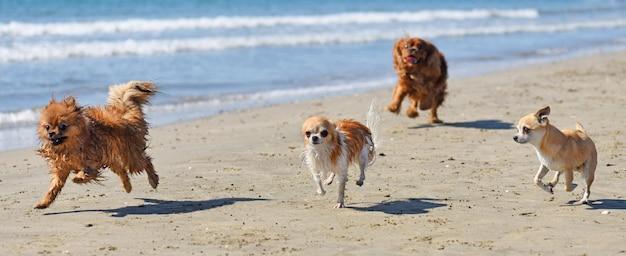 Cães correndo na praia