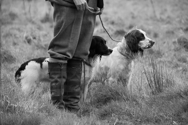Cães de coleta escolher ao ar livre caçar animais de estimação