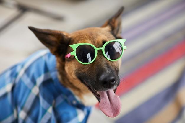Cães de festa de verão
