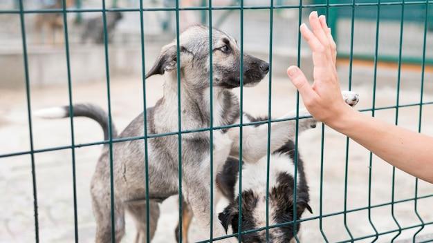 Cães de resgate felizes atrás da cerca em abrigo de adoção