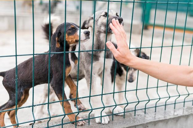 Cães de resgate ficando felizes porque alguém veio vê-los no abrigo