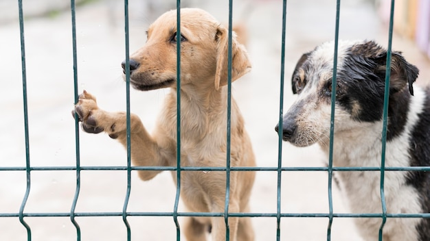 Cães de resgate fofos em abrigo de adoção atrás da cerca