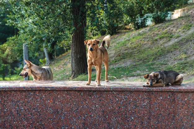 Cães de rua sem-teto abandonados amigáveis pacificamente colocando e ficando em uma pedra de mármore no parque da cidade