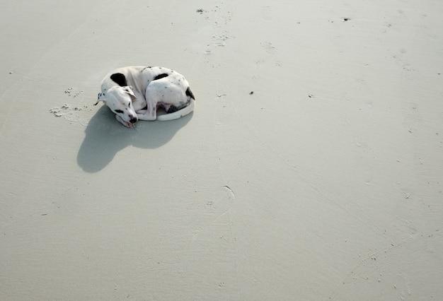 Cães deitado na praia.