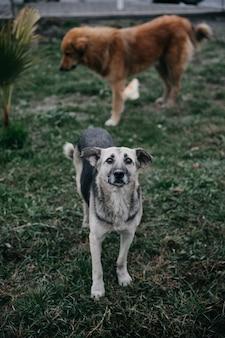 Cães desabrigados caminhando no parque.