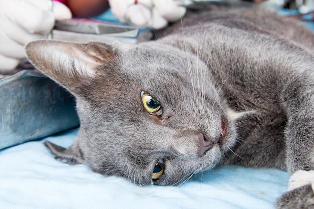Cães e gatos castrados no dia mundial da raiva, esterilização cirúrgica de cães, gatos