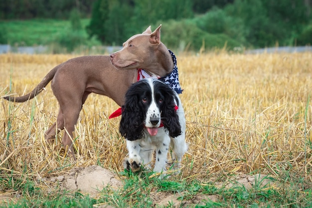 Cães em um palheiro