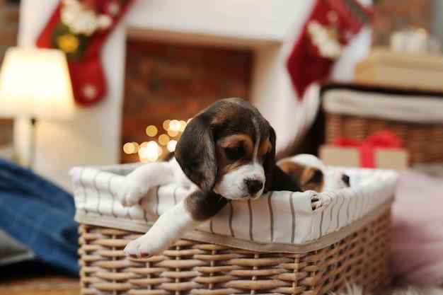 Cães em uma cesta