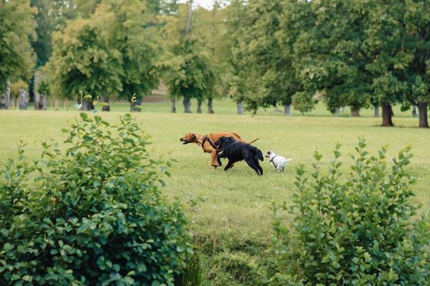 Cães estão brincando e correndo na natureza