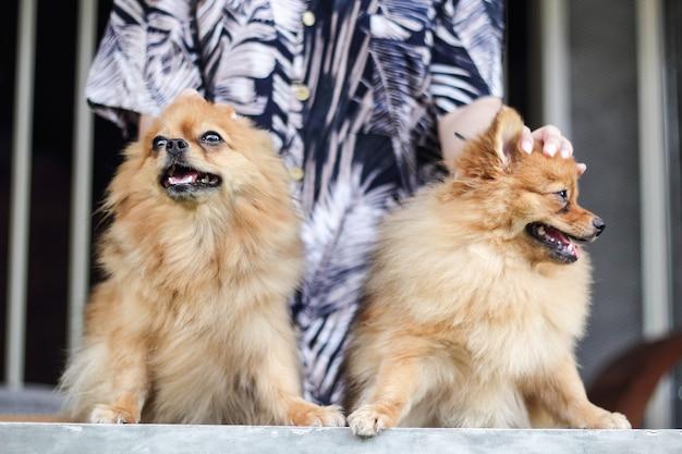 Cães estão procurando por donos.