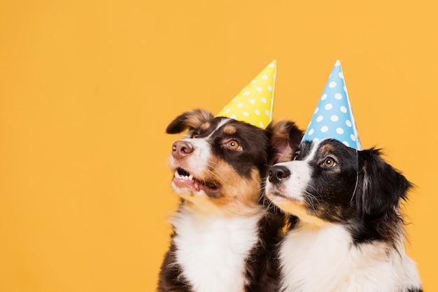 Cães fofos com chapéus