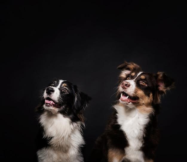 Cães fofos em pé