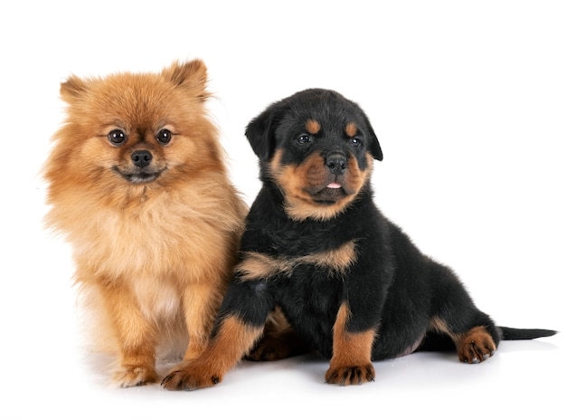 Cães isolados