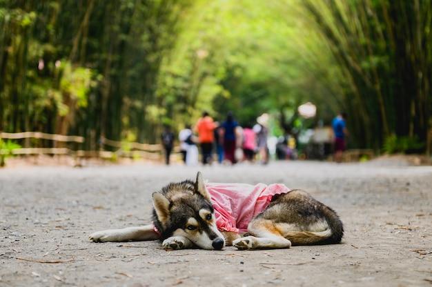 Cães na floresta de bambu na tailândia