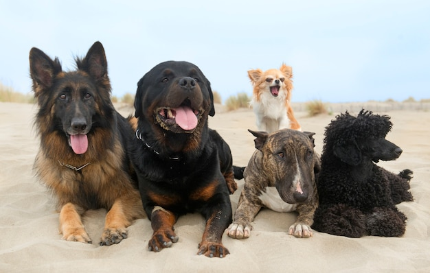 Cães na praia