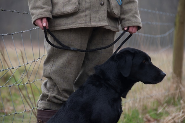 Cães pegando chumbo colhendo campo preto