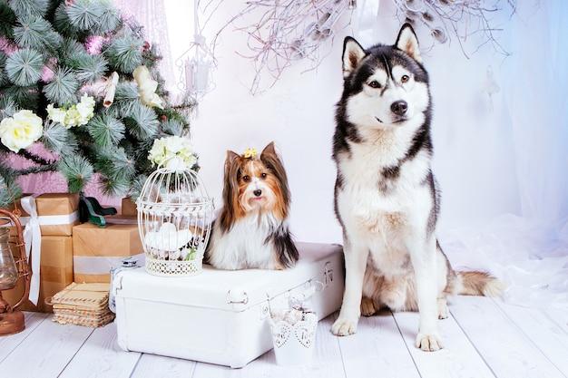 Cães puro-sangue sentam-se no fundo das decorações de ano novo e da árvore de natal