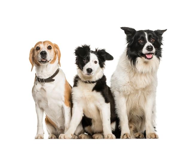 Cães sentados na fila