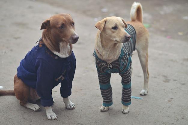 Cães vadios na índia usando roupas para não ficarem com frio