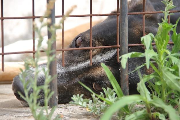 Cães vítimas de abuso de animais