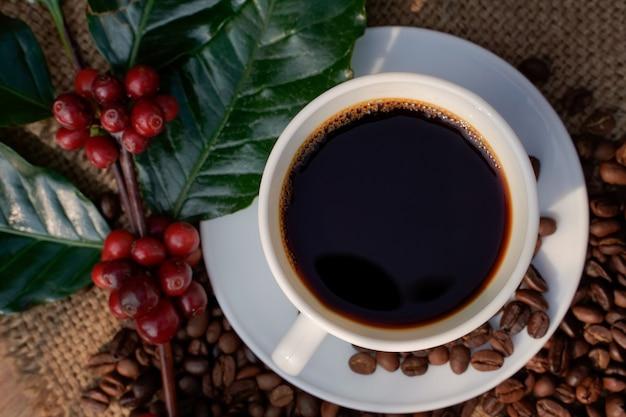 Café americano em uma xícara de café branco com fundo de grãos de café torrados e crus.