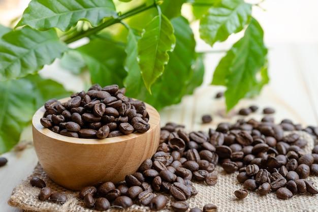 Café em grão torrado em uma tigela de madeira com folhas na manhã fresca. Foto Premium