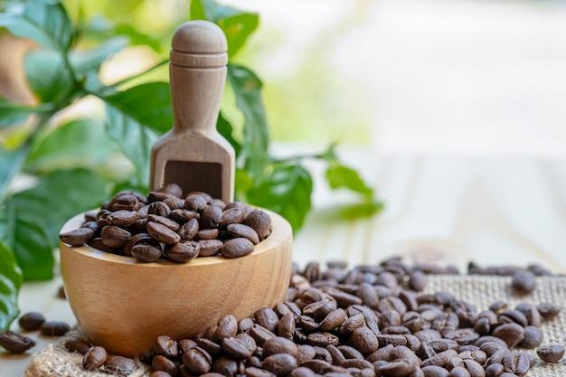Café em grão torrado em uma tigela de madeira com folhas na manhã fresca.
