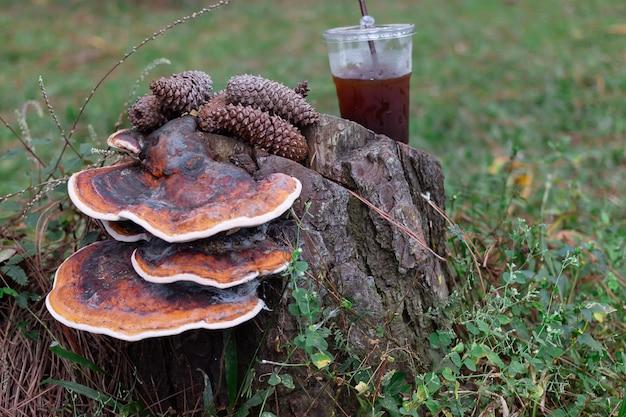 Café frio e sementes de pinheiro na madeira de pinheiros