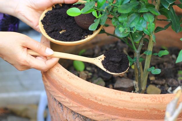 Café moído, resíduo de café é aplicado à árvore e é um fertilizante natural, passatempo de jardinagem