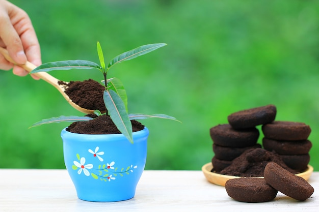Café moído, resíduo de café é aplicado à árvore e é um fertilizante natural