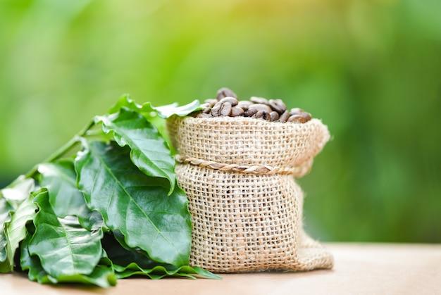 Café torrado no saco com folha verde na mesa de madeira e natureza verde