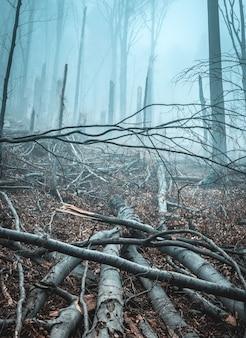 Caído e quebrado por árvores de tempestade na floresta