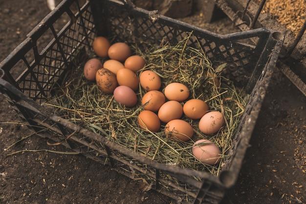 Caixa com ovos frescos colhidos