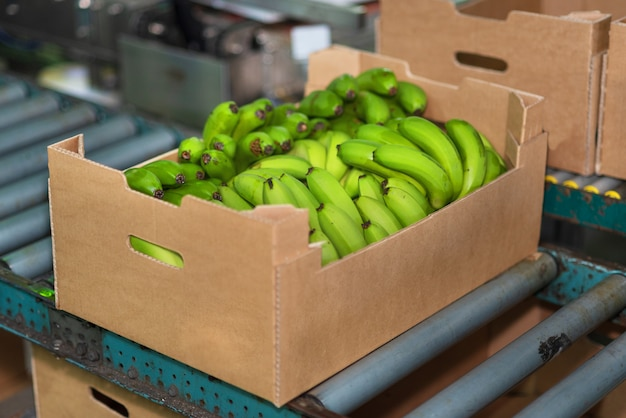 Caixa de banana na cadeia de embalagens